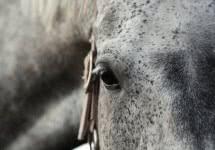 horse_v4.jpg
