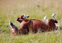 horse_v7.jpg